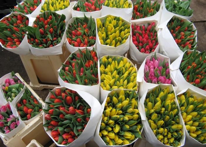 Тюльпаны и розы по себестоимости 6-8 марта 2014 г.