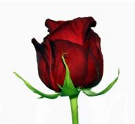 RED NAOMI! Роза красная