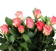 TACAZZI+ Роза красная